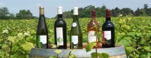 les bons vins de la région de Nantes !